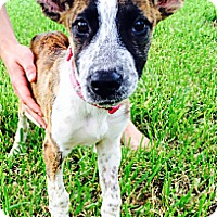Adopt A Pet :: Nina - Miami, FL