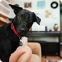 Adopt A Pet :: Sylvia - Austin, TX