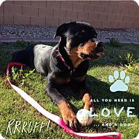 Adopt A Pet :: JEWELS - Gilbert, AZ