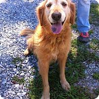 Adopt A Pet :: Fawn - BIRMINGHAM, AL