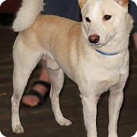 Adopt A Pet :: Kido - Manassas, VA