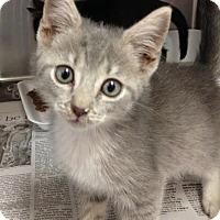 Adopt A Pet :: Willow - East Brunswick, NJ