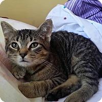Adopt A Pet :: Spartacus - Muskegon, MI