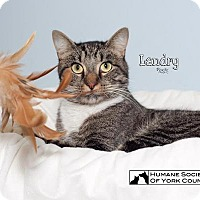 Adopt A Pet :: Landry 5513 - Fort Mill, SC