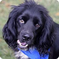 Adopt A Pet :: Finn - Alpharetta, GA