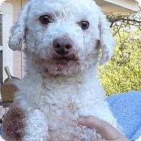 Adopt A Pet :: Stormy II - Crump, TN