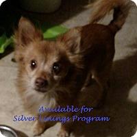 Adopt A Pet :: Hobie - San Diego, CA