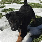 Adopt A Pet :: Rain - Adoption Pending