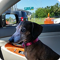 Adopt A Pet :: Penny - Pinellas Park, FL