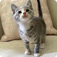 Adopt A Pet :: Mayfair - Addison, IL