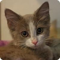 Adopt A Pet :: Sable - Canoga Park, CA