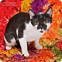 Adopt A Pet :: Oreo - Cincinnati, OH