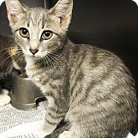 Adopt A Pet :: Lynn - Chattanooga, TN