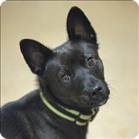 Adopt A Pet :: Walker - Santa Rosa, CA