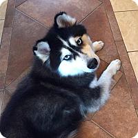 Adopt A Pet :: Mulan - Crystal Lake, IL