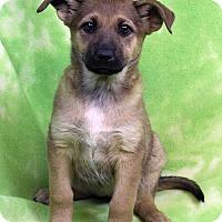 Adopt A Pet :: NANA - Westminster, CO