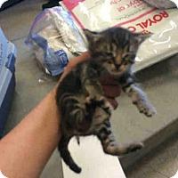 Adopt A Pet :: MERRY - San Martin, CA