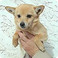 Adopt A Pet :: Alissa - Lakewood, CO