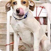 Adopt A Pet :: Hollis - Waldorf, MD