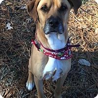 Adopt A Pet :: BUDDY - Coeburn, VA