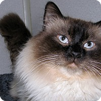 Adopt A Pet :: Gordo - Ruidoso, NM