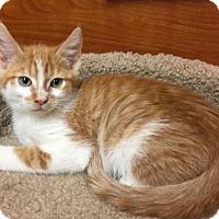 Adopt A Pet :: Sean - san diego, CA
