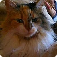 Adopt A Pet :: Taj - Laguna Woods, CA