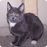 Adopt A Pet :: K-Rescue3-Chelsea - Colorado Springs, CO