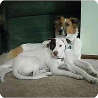 Adopt A Pet :: Jack - Harrisburgh, PA