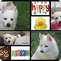 Adopt A Pet :: Jackson - Elmhurst, IL