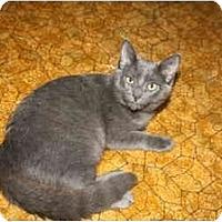 Adopt A Pet :: Pearl - Bonita Springs, FL