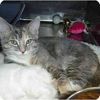 Adopt A Pet :: Graycie - Modesto, CA
