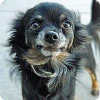 Adopt A Pet :: Cujo - Cheyenne, WY