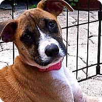 Adopt A Pet :: Myrtle - Miami, FL