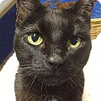 Adopt A Pet :: PJ - N. Billerica, MA