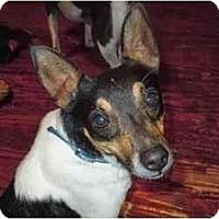 Adopt A Pet :: Buddie in Lufkin - Houston, TX