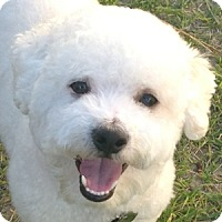 Adopt A Pet :: Monty - La Costa, CA