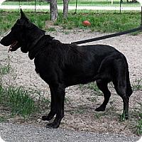 Adopt A Pet :: NICO - SAN ANTONIO, TX