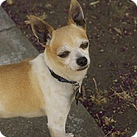 Adopt A Pet :: Taco - Vacaville, CA