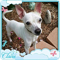 Adopt A Pet :: CLAIRE - Fort Worth, TX