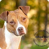Adopt A Pet :: Beck - Medina, OH