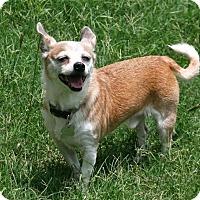 Adopt A Pet :: Mister - Lufkin, TX