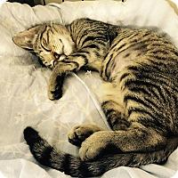 Adopt A Pet :: Georgia - Speonk, NY