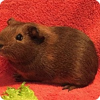 Adopt A Pet :: Theodore - Steger, IL