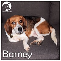Adopt A Pet :: Barney - Pittsburgh, PA