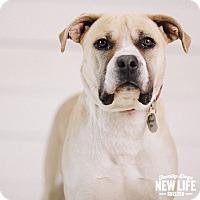 Adopt A Pet :: Sophie - Portland, OR