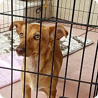 Adopt A Pet :: LARREN - Gustine, CA