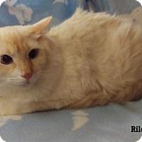 Adopt A Pet :: Riley - Fullerton, CA