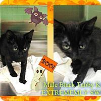 Adopt A Pet :: BLACK KITTEN - Kenansville, NC