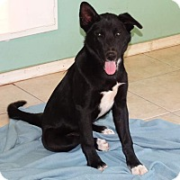 Adopt A Pet :: Georgie - Chandler, AZ